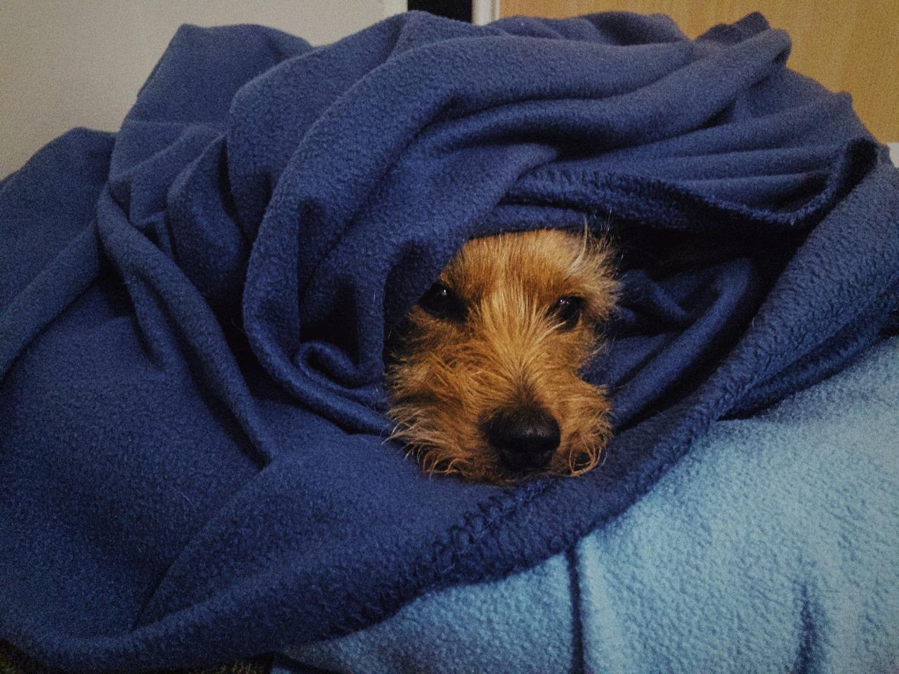 <p>Beanie sure made himself cozy overnight.</p>