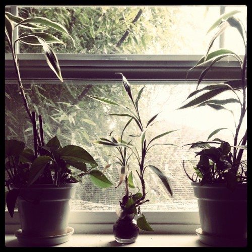 Sun is Out #photooftheday #igseattle #seattle #plant #window #goodmorning #sunshine
