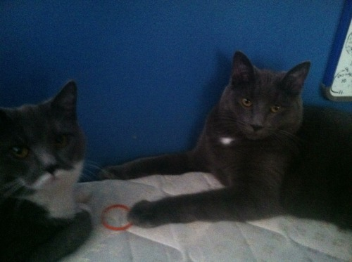 My kitties <3