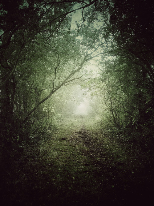 juliancalverley:  #iphoneonly - Public bridleway under Autumn fog, near Sandon, Hertfordshire.