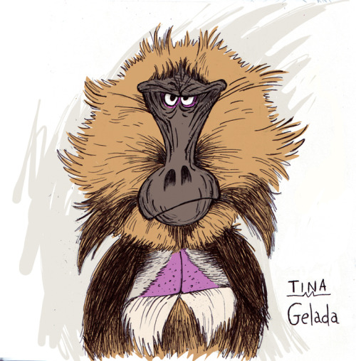 My drawing of a Gelada monkey! I love their wrinkly face!  www.itsmonkeymonday.com