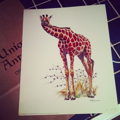 Got this 1972 print today while #antiquing. #giraffes