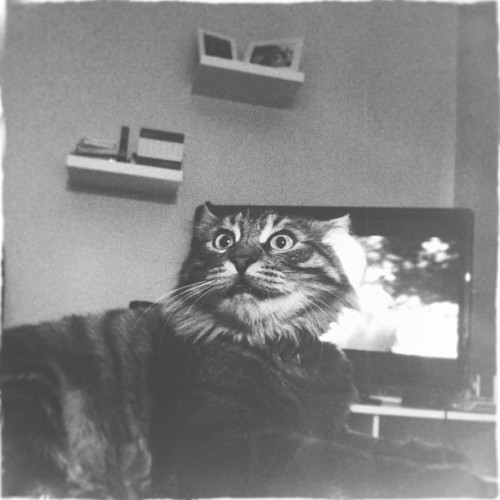 #hipstamatic #bw #portrait #cat #cat_lovers #igers #igersturkey #instagram #photitos  (Raingini Malikanesi'da)