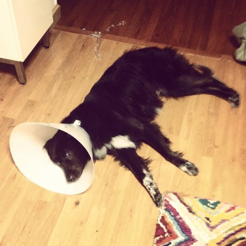 He held out 8 years, but everybody's gotta wear the cone of shame at some point #Brady
