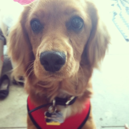Weekly Dose of Cuteness: This adorable rescued pooch recently found his forever home. Want to help other cuties like Jack? Pledge to end animal homelessness by adopting from your local shelter and never buying from pet stores or breeders!