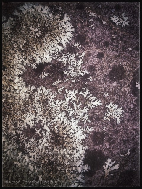 Lichen at Lehman by Aaron Glenn Campbell on EyeEm