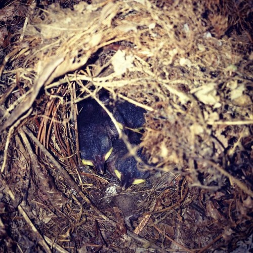 Day 10. Celebrate life. We were blessed to have a mama wren make a nest for her babies on our back porch. She constantly flies in and out to feed them. So cool! #ckpc #celebratelife