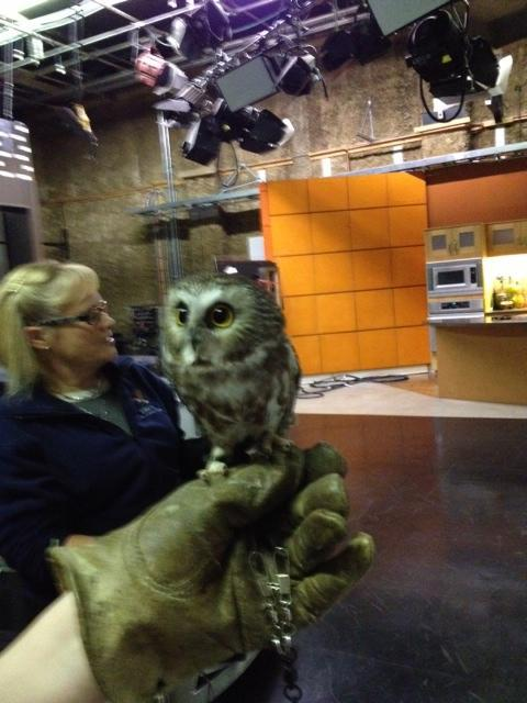 aweh-cute:  This weekend, my mom met a six inch owl. Hey there, lil guy!  awesome aww posts
