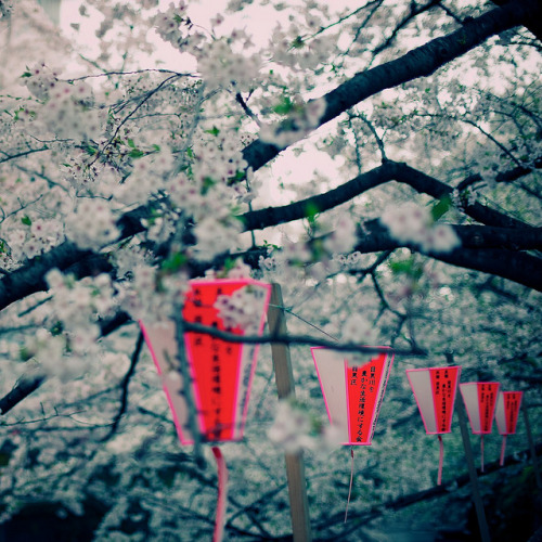 dreams-of-japan:  Nikon Select 2011-04-09 13-02-15 by MichelleSimonJada on Flickr.