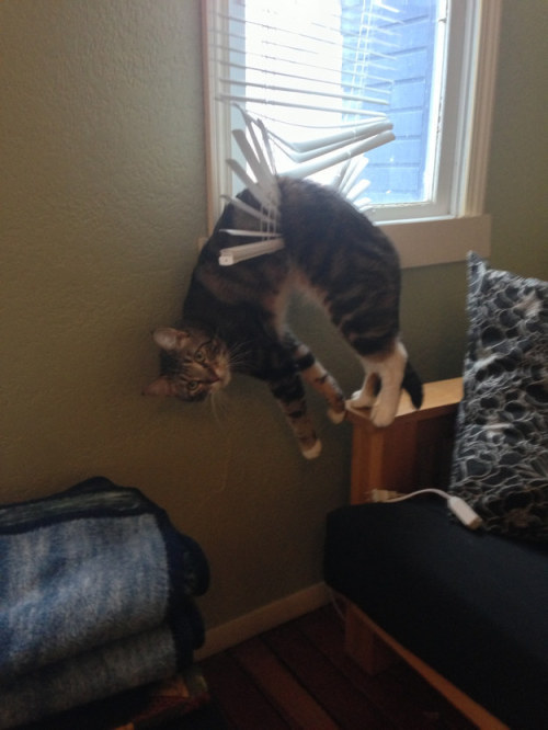 pastel-gizibe:   kissmycountryass:     Cats Being Cats   What are cats even? Adorable. That's what.