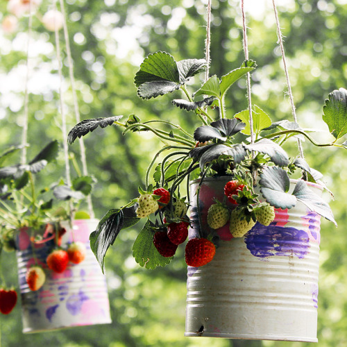 DIY Hanging Strawberry Planters from We Made That