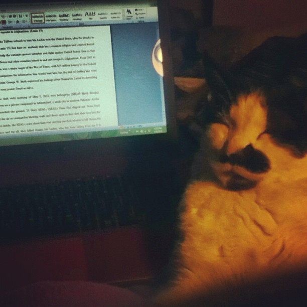 Alvin helping me finish my essay :> good kitty! #Essay #SucksALittle #wednesday