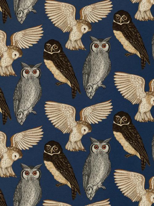 "extraordinaryfearlessness:  lookforastar:  OWL JADE OWL.  Hey, fantasticallyenchanted… OWLSSSSS.  OWLSSSSSS :""""DI love you two infinitely."