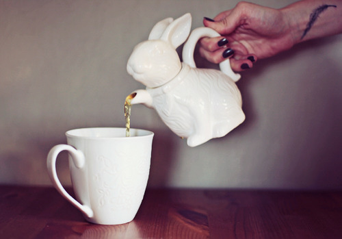 mlle-annetoinette:  Katie look the bunny is giving you tea from its paw =3