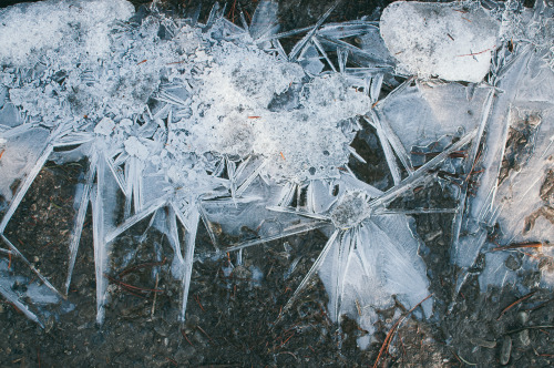 Saw this interesting pattern of ice crystals over the surface of a shallow puddle, while hiking in Banff.  Love the asterisk shapes.