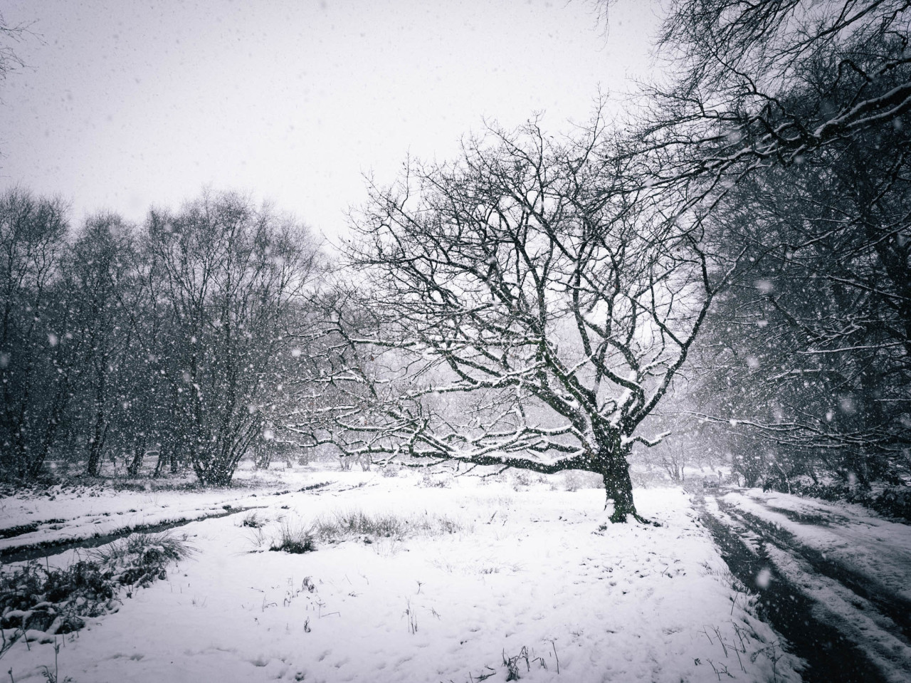 Snowscape, Somerset Photographed by Freddie Ardley #landscape #photographers on tumblr #photography#photographer #artists on tumblr #original photographers#nature#snow#weather#beauty#winter#mountains#story#lit#writing#hasselblad