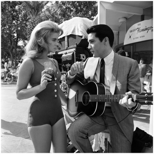 talent-only:  Ann-Margret and Elvis PresleyViva Las Vegas | 1964  Gotta talk to some sort of guitar guy today now.