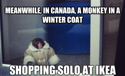 silveriodide:  cornycornguy:  IKEA monkey  Oh god this made my day today.  …well
