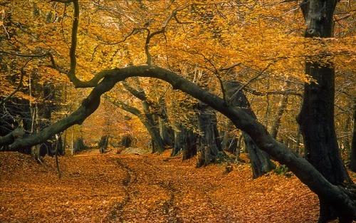 Lady's Walk, Ashridge Forest, Hertfordshire, England | Late Autumn Views (1 of 9) by ukgardenphotos