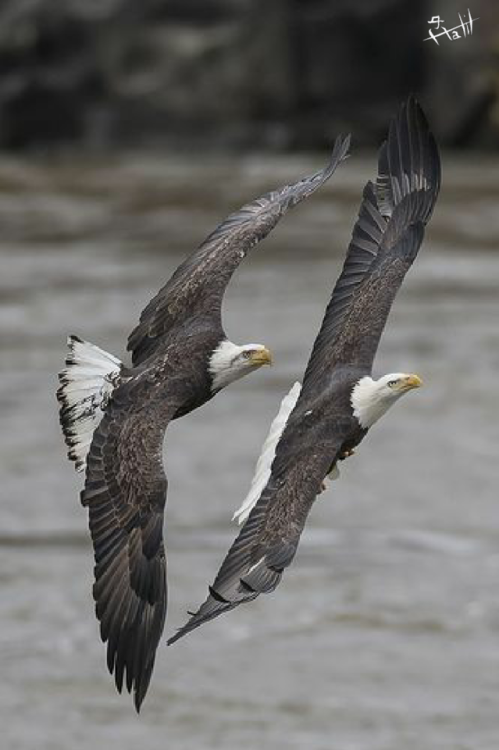 eagle lowe