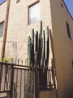 gypsyone:  I love cacti