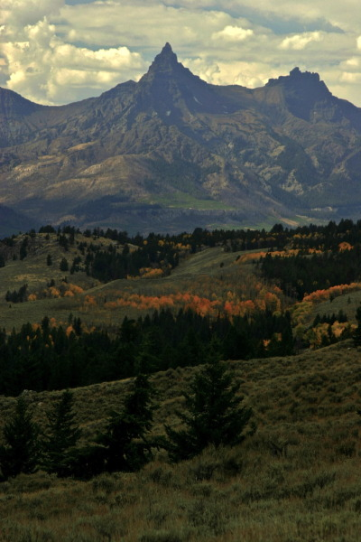jasontylerburton:Pilot Peak in Autumn from the Beartooth Highway