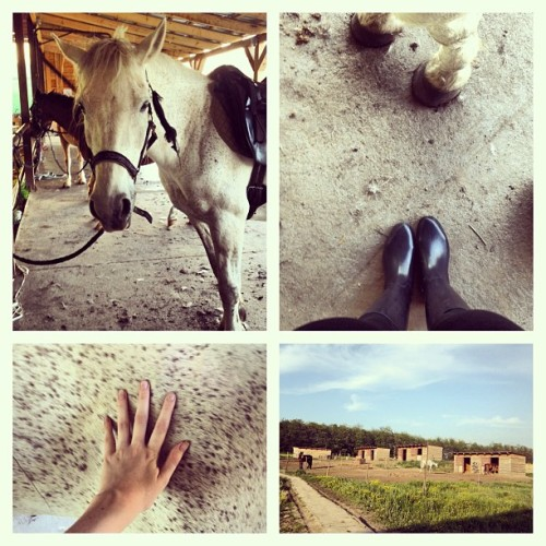 ride a white #horse / new #hobby #budapest #mik #wednesday #sport #outdoor #cute  (at Szilaj Lovas Park)