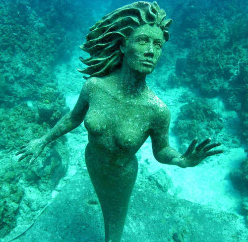 mermaids-and-anchors:  underwater mermaid statue off shore from Sunset House in Grand Cayman