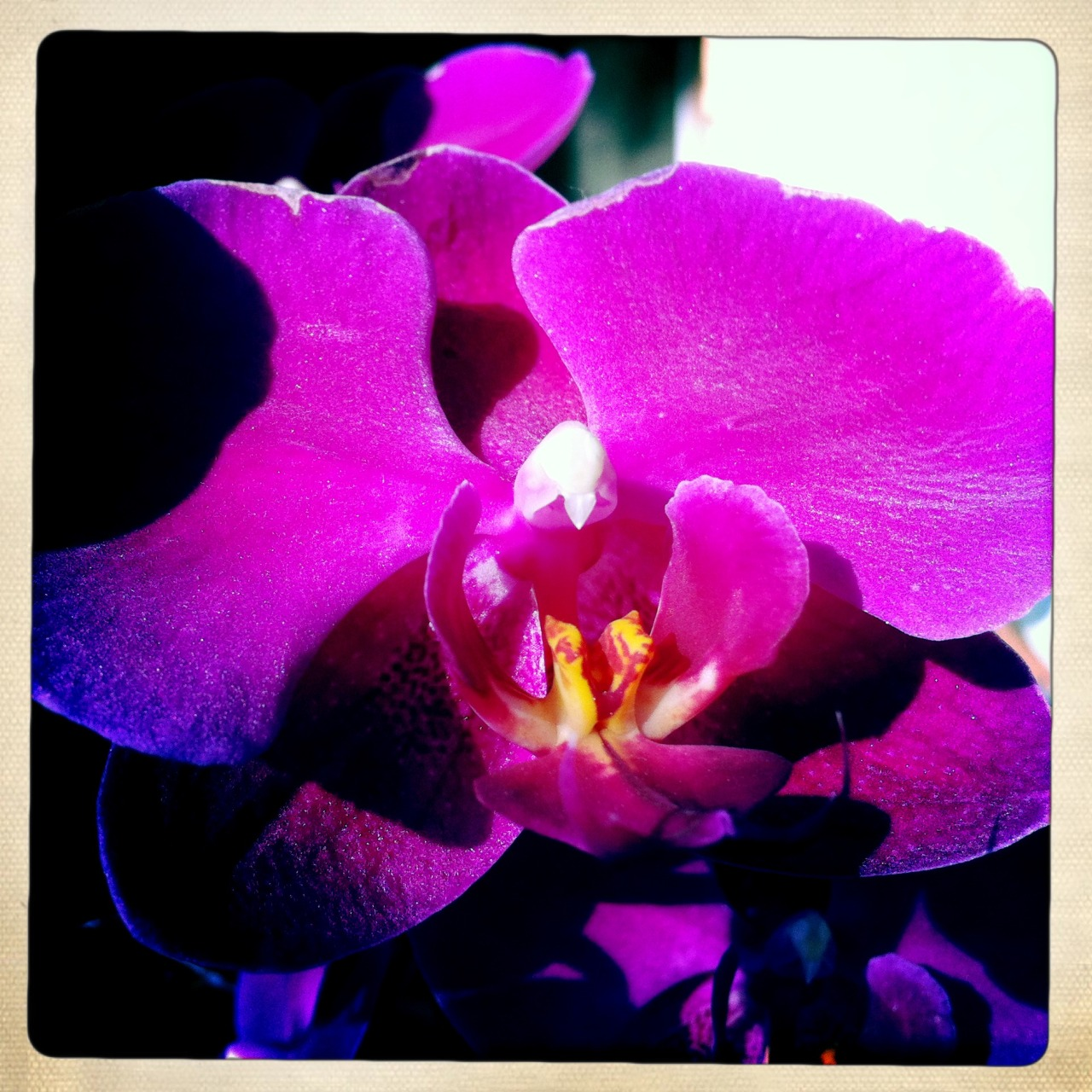 Orchid from my Mom's #birthday arrangement.