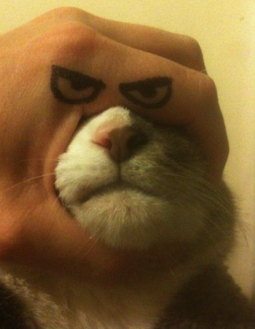 omg-pictures:  Angry Cat Handshttp://omg-pictures.tumblr.com