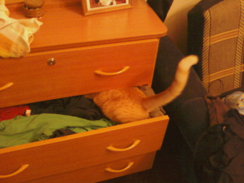 get out of there cat. you are not a clothes.