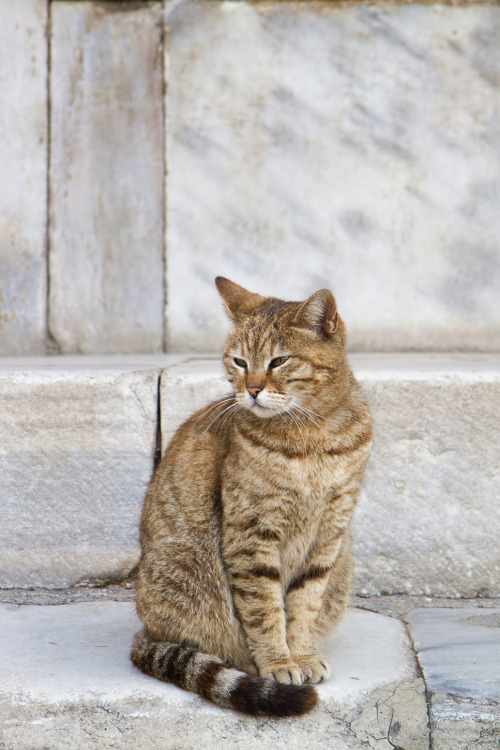 dailycatistanbul:  A cat outside of the Hagia Sophia. Click on the link to learn about the history of the Ayasofya and to watch and awesome timelapse video of it as well.