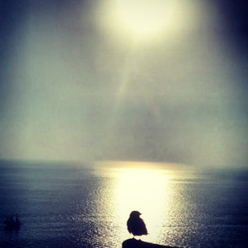 #bird in a #sunset #oia #santorini #greece #travel #europe #throwback