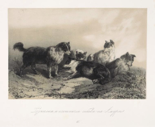 Draught-dogs and hounds on Amur River (1859) from the book A Journey to the Amur writtenby Russian naturalist Richard Karlovich Maack