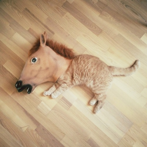 carnetimaginaire:  horsin' around