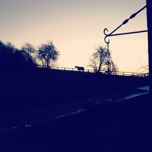towritepurebloodonherarms:  Morning Horsey! #landscape  #country #england #horse #beautiful