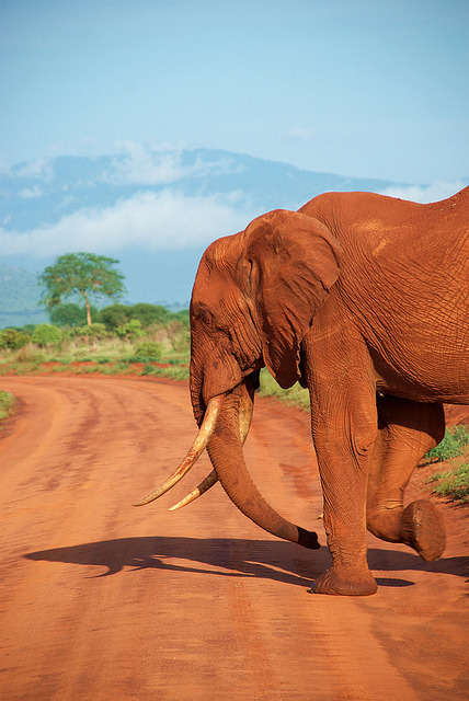 darkw00ds:  kenya: tsavo east by maddau on Flickr.
