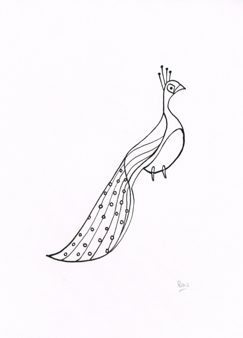 Peacock Tail - Dip pen and ink drawing Now available to buy from FluidAnimals.com!