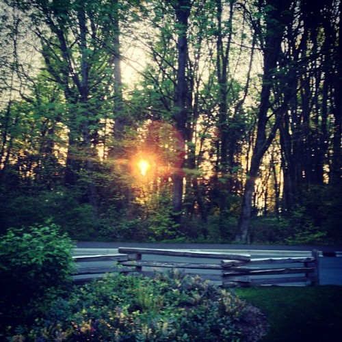Sunset at Stanley Park #sunset #bc #Vancouver #travel #trees #forest #park