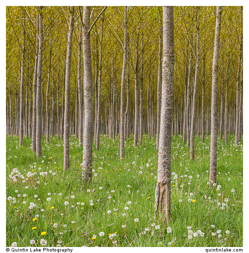 Infinite ForestInfinite Forest. Kemble, England. 40x40cm Signed prints available at £195 each (Edition of 25).To…View Post