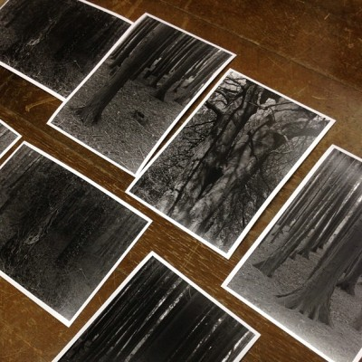 #darkroom David takes pictures of trees sometimes. http://bit.ly/160eLI3
