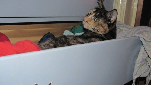 get out of there cat. that is a drawer not a bed.