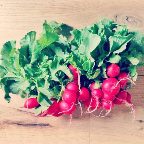 radishes from the union square greenmarket