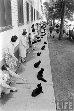 celibacyexperiment:  This is awesome.  Hollywood auditions for black cats!!