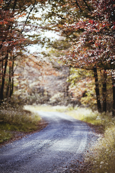 lamescapes:  Michaux State Forest, PA