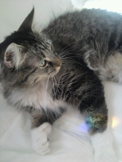 wullflower:  cuteys:  omg so close to 20k :')  your cat is the cutest