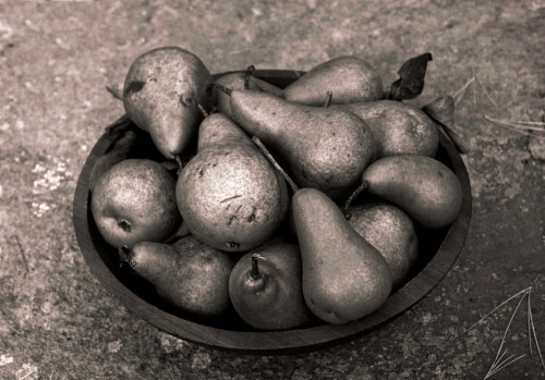 Pears, 8x10 fine art black & white photograph by KSinclairPhotography (25.00 USD) nature, gift, pears, sepia, fall, bowl, fruit, autumn, abundance, harvest, valentine, art, photograph