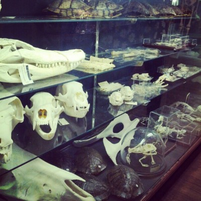 #evolutionnyc #skulls #skeletons