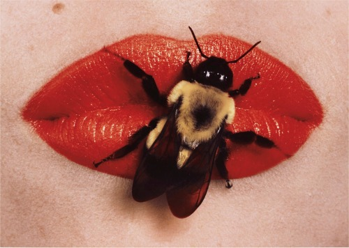 rumikokoyanagi:  Irving Penn:Bee on Lips, New York September 22, 1995