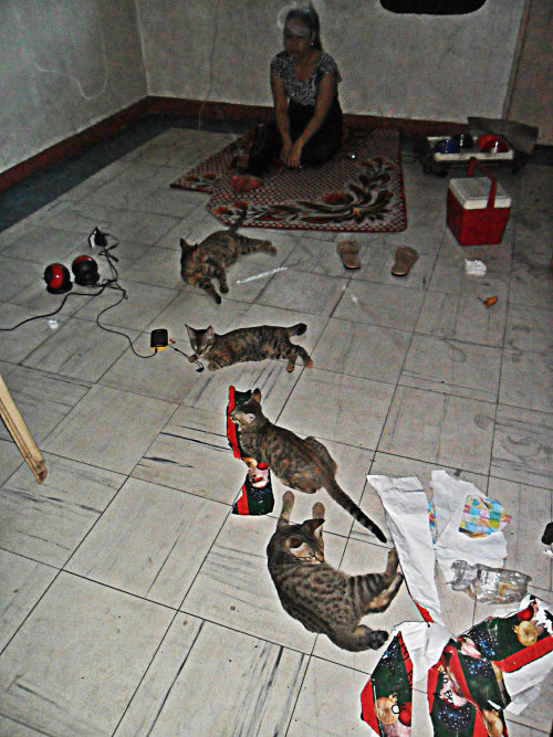 getoutoftherecat:  i know we're pretty wasted but really cats..really? how wasted are you?
